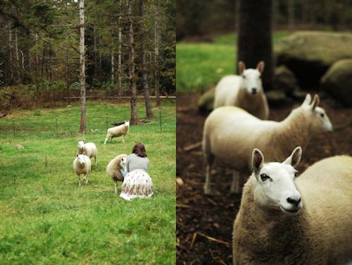 e991bc871dd122f4-feeding_sheep